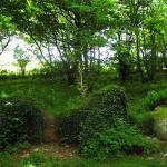 Сады Хелигана-3
