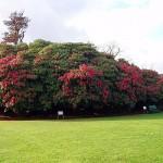 Сады Хелигана-4