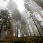 Sequoia National Park1