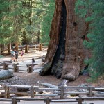 Sequoia National Park9