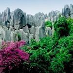 Каменный лес2