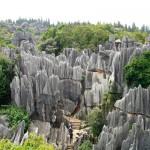Каменный лес3