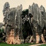 Каменный лес5