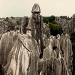 Каменный лес8