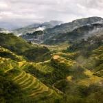 Рисовые террасы1