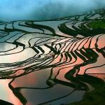 Рисовые террасы3