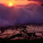 Рисовые террасы8