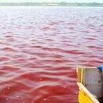 Розовое озеро Ретба6