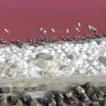 Розовое озеро Ретба8