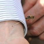 Последние секунды жизни пчелы