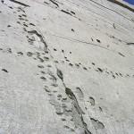 Стена динозавров2