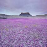 Цветение пустыни Юта