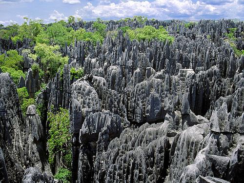 Цинги де Бемараха, Мадагаскар, каменный лес