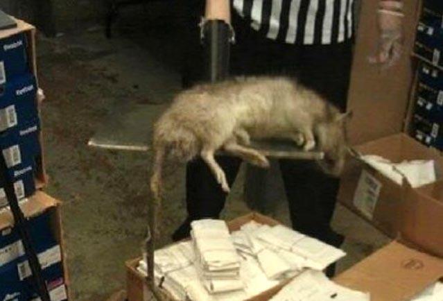крысы-мутанты в Иране