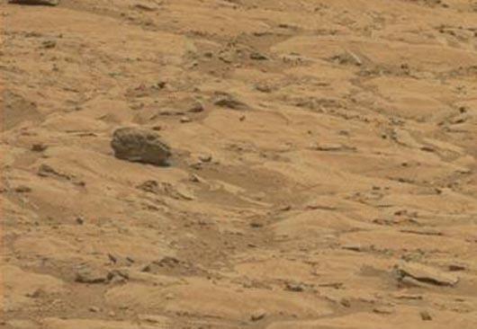 Череп рептилии на Марсе