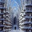 cattedrale vegetale2
