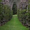 cattedrale vegetale4