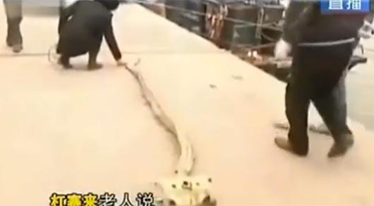 Скелет дракона, Китай, 2013 год