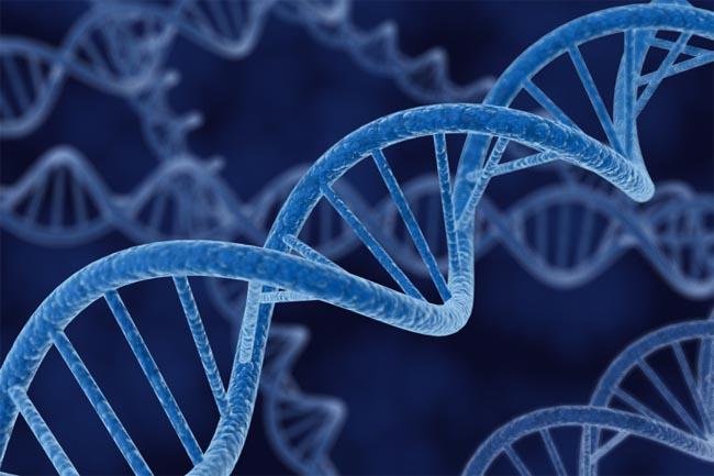 ДНК, геном человека
