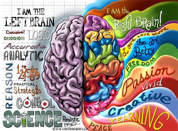 Мозг, левое и правое полушарие