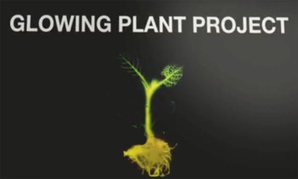 Glowing Plant, светящееся растение