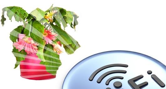 наука, вредный Wi-Fi