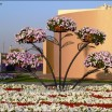 Dubai Miracle Garden6