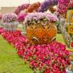 Dubai Miracle Garden7