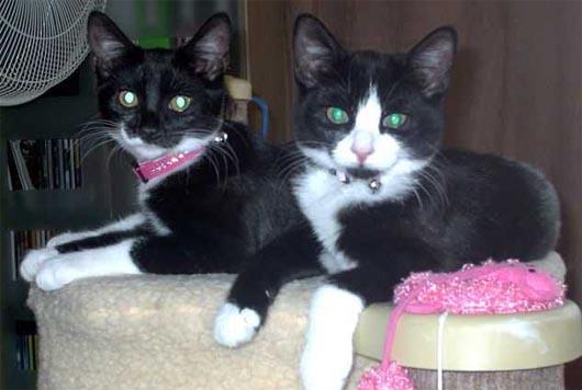 кошки Тинкер и Белл