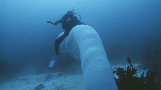 Морской единорог, Pyrostremma Spinosum, океан, мистические существа