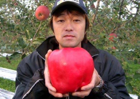 Япония, гигантское яблоко, мировой рекорд