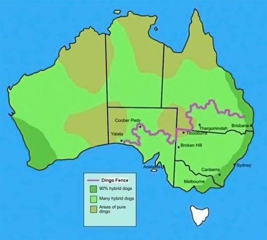 Австралия, самый длинный в мире забор