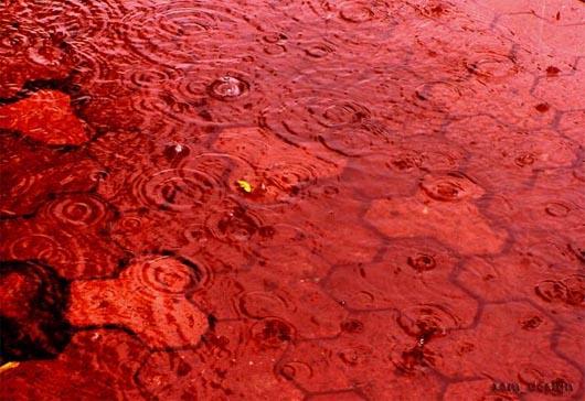 кровавый дождь, аномалия