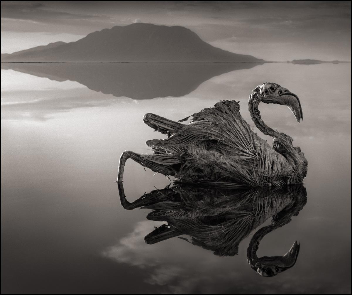 Озеро Натрон, Аномальная зона, Natron