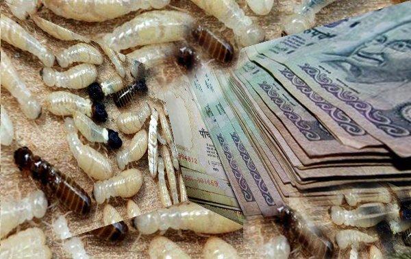 Termity-Sjeli-Dengi