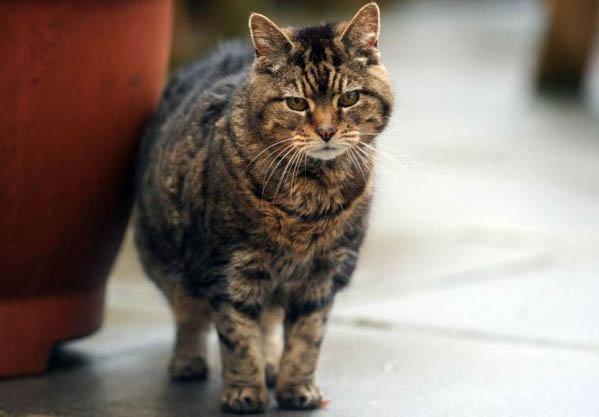 самая старая кошка, Книга рекордов Гиннеса