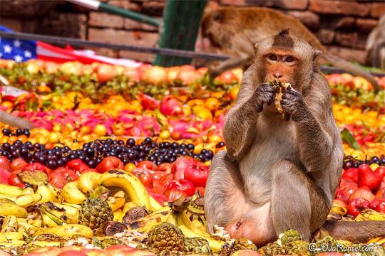 странные праздники, пир обезьян тайланд